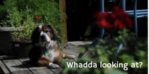 Whadda looking at_
